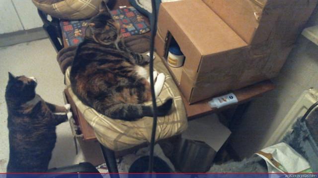 150309webcam-katten